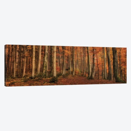 Winter's Soon To Come Canvas Print #OXM1895} by Norbert Maier Canvas Art