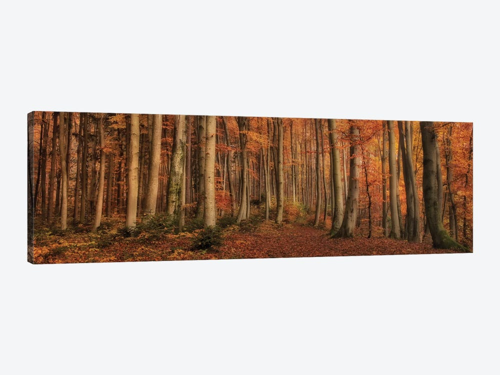 Winter's Soon To Come by Norbert Maier 1-piece Canvas Artwork