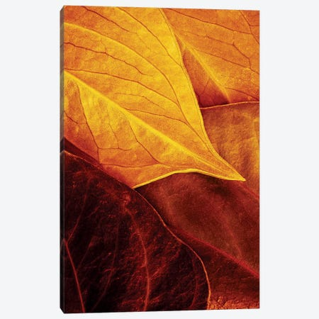 Leaves Canvas Print #OXM190} by Luiz Laercio Canvas Artwork