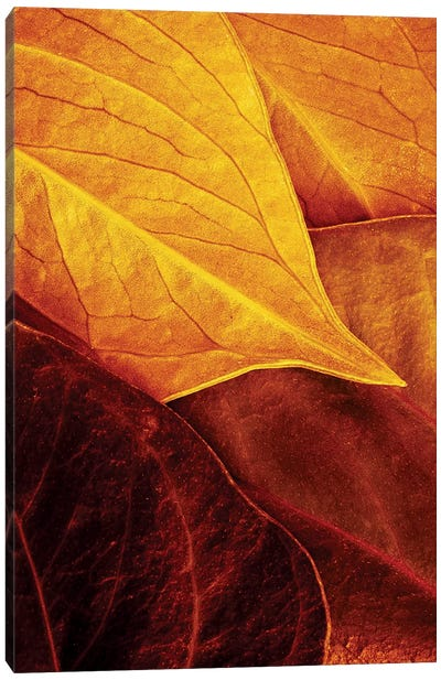 Leaves Canvas Art Print