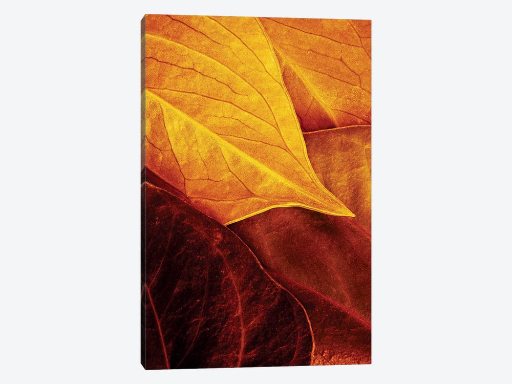 Leaves by Luiz Laercio 1-piece Art Print