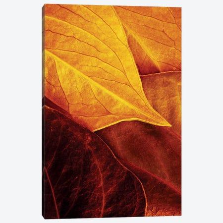 Leaves 3-Piece Canvas #OXM190} by Luiz Laercio Canvas Artwork