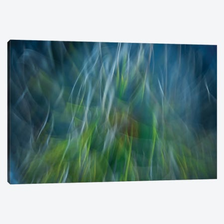 Electro-Shock Blues Canvas Print #OXM1931} by Paulo Abrantes Canvas Art