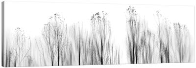 No Grounds Canvas Print #OXM1934