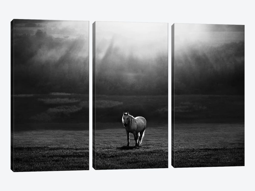 Morning Appearance 3-piece Canvas Artwork