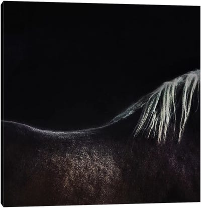 The Naked Horse Canvas Art Print