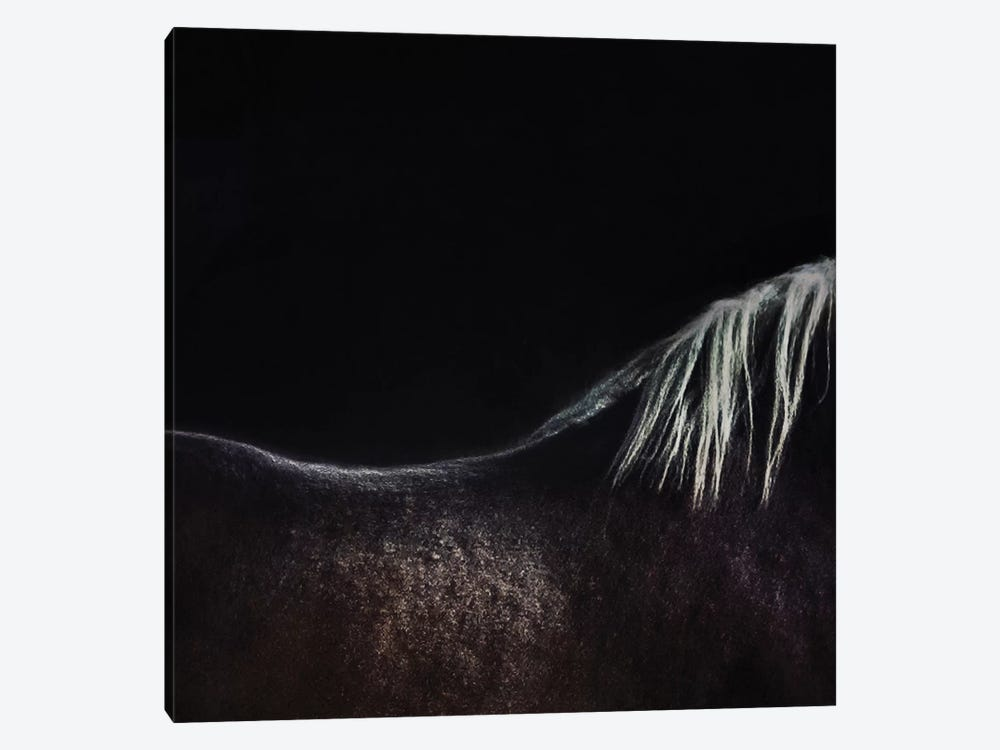 The Naked Horse by Piet Flour 1-piece Canvas Artwork