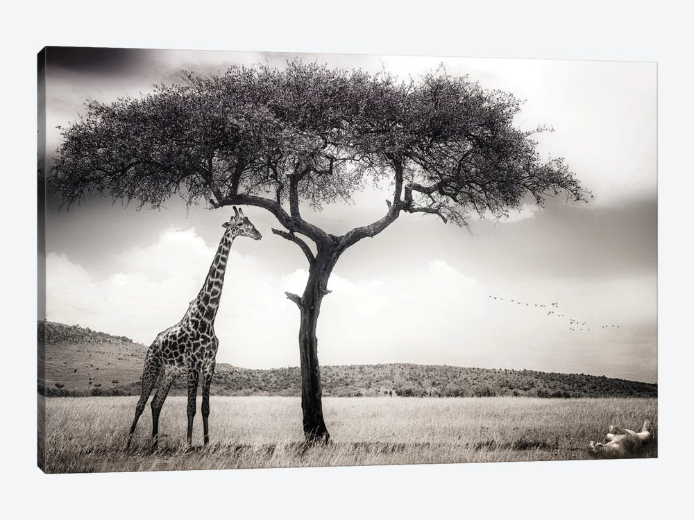 Under The African Sun by Piet Flour 1-piece Canvas Art Print