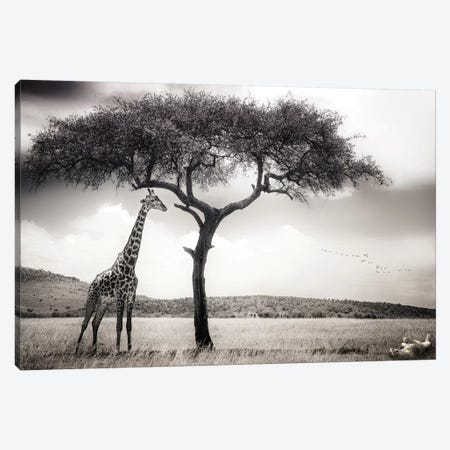 Under The African Sun Canvas Print #OXM1973} by Piet Flour Canvas Art