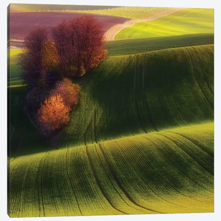 Green Fields Canvas Print #OXM1975} by Piotr Krol Canvas Print