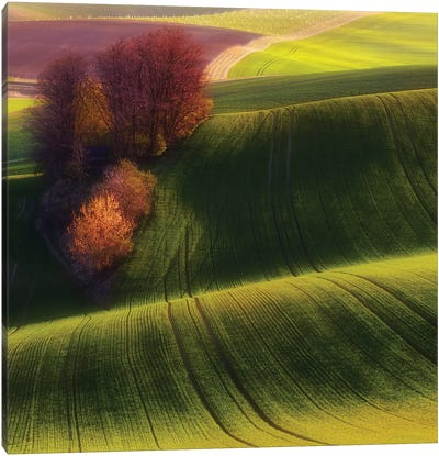 Green Fields Canvas Art Print