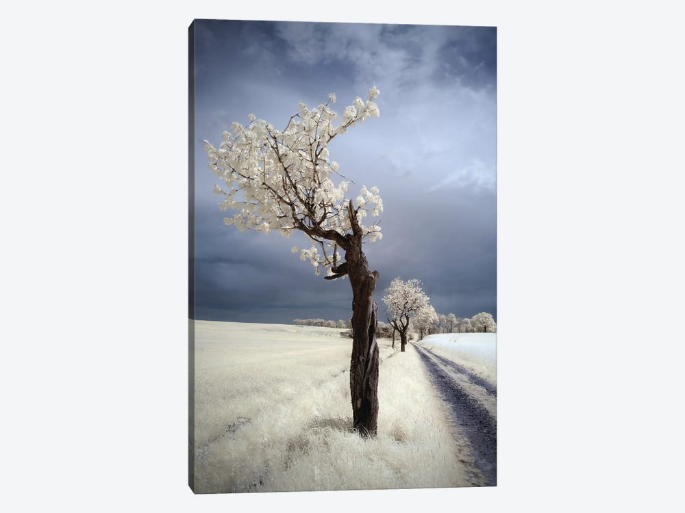 Irenka by Piotr Krol 1-piece Canvas Wall Art