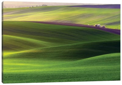 Verdant Land Canvas Art Print
