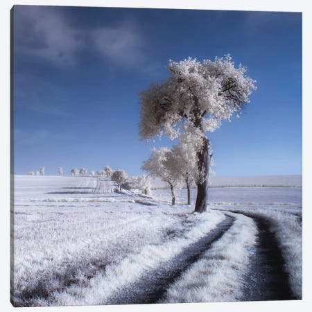 Winter In Summer Canvas Print #OXM1981} by Piotr Krol Art Print