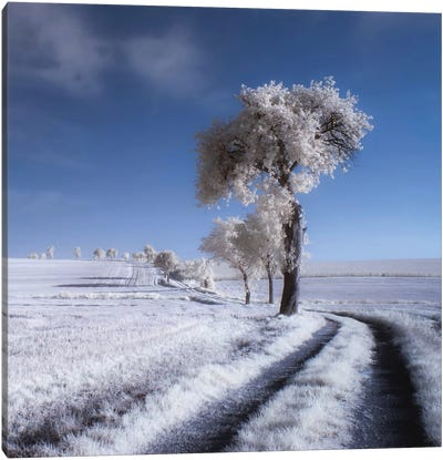 Winter In Summer Canvas Art Print