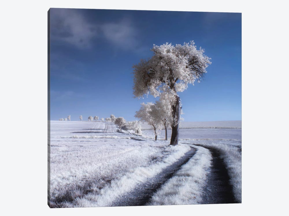 Winter In Summer by Piotr Krol 1-piece Canvas Wall Art
