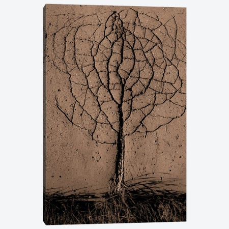 Asphalt Tree Canvas Print #OXM1998} by Rasto Gallo Canvas Wall Art