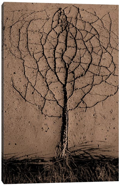 Asphalt Tree Canvas Art Print