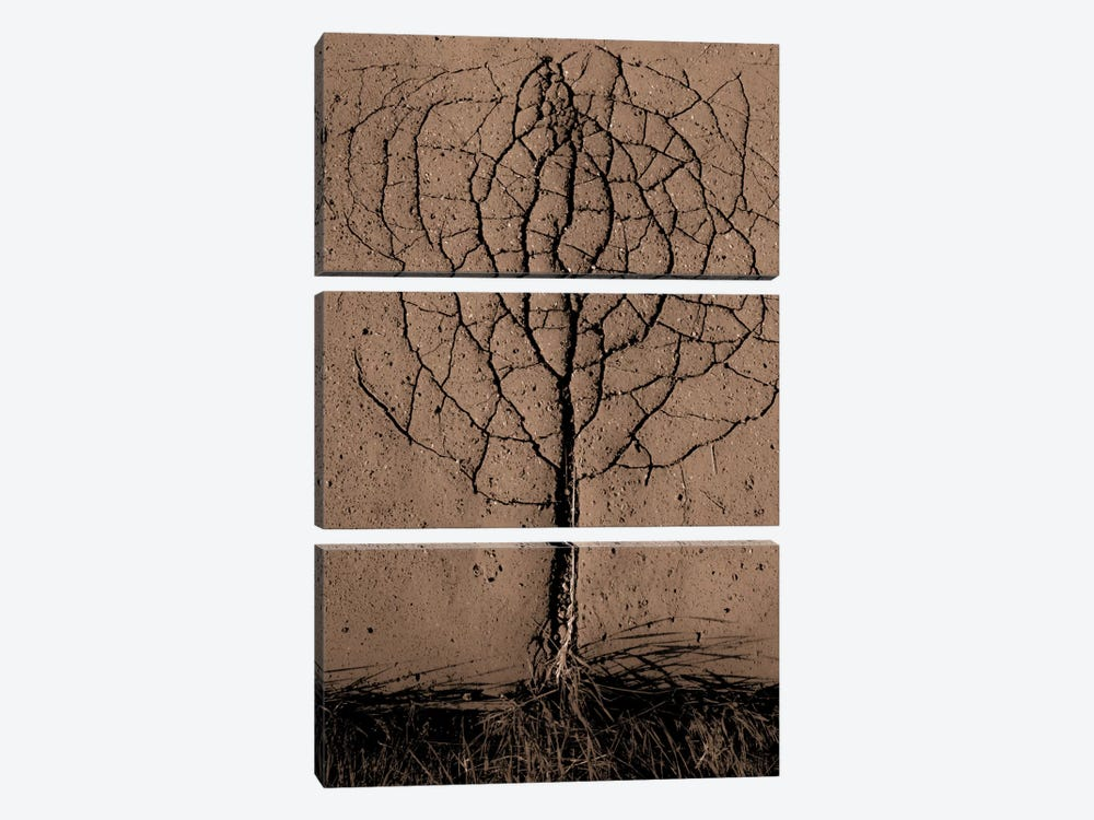 Asphalt Tree by Rasto Gallo 3-piece Canvas Artwork