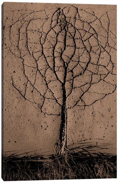 Asphalt Tree Canvas Art Print