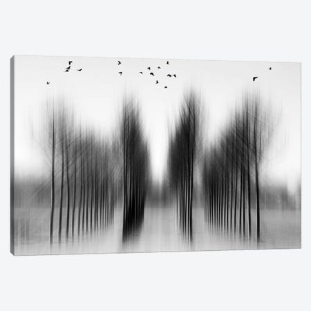 Tree Architecture Canvas Print #OXM2037} by Roswitha Schleicher-Schwarz Canvas Wall Art