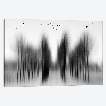 Tree Architecture Canvas Print #OXM2037} by Roswitha Schleicher-Schwarz Canvas Wall Art