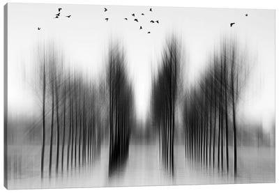 Tree Architecture Canvas Art Print