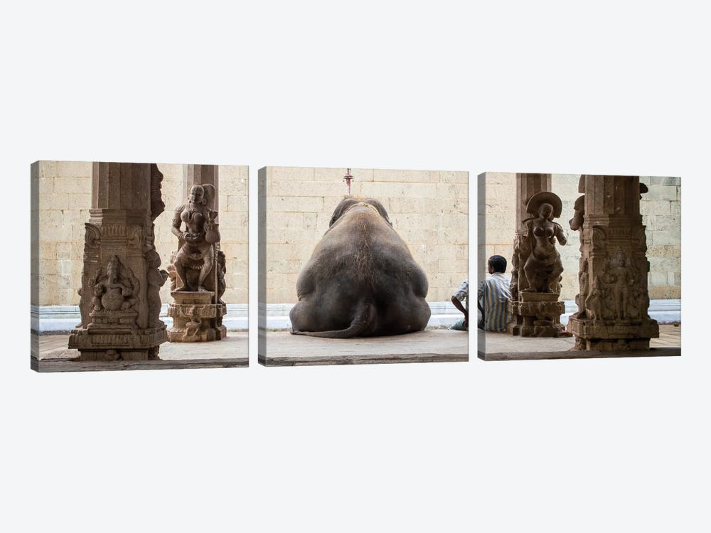 The Elephant & It's Mahot 3-piece Canvas Print