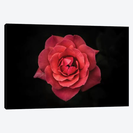 Simplicity Is Beauty Canvas Print #OXM2043} by Rui Boino Canvas Artwork