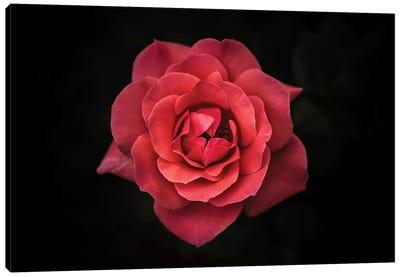Simplicity Is Beauty Canvas Art Print