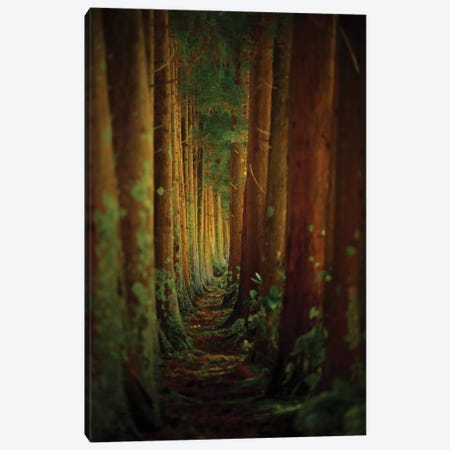 Forest Canvas Print #OXM2044} by Rui Caria Art Print