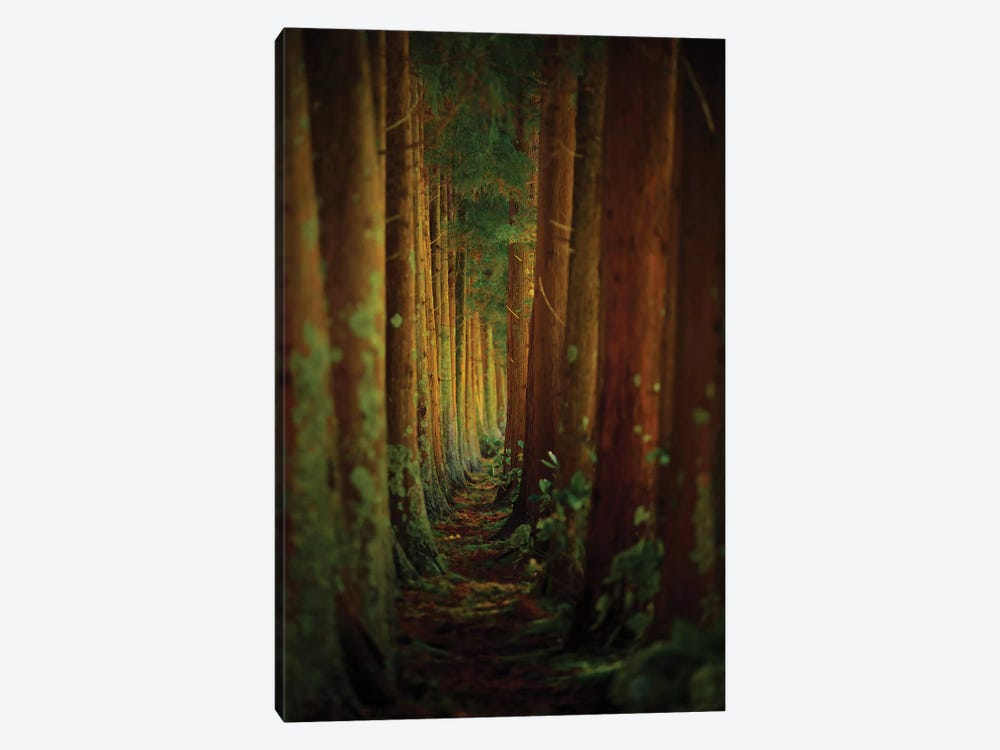 Forest by Rui Caria 1-piece Canvas Art Print