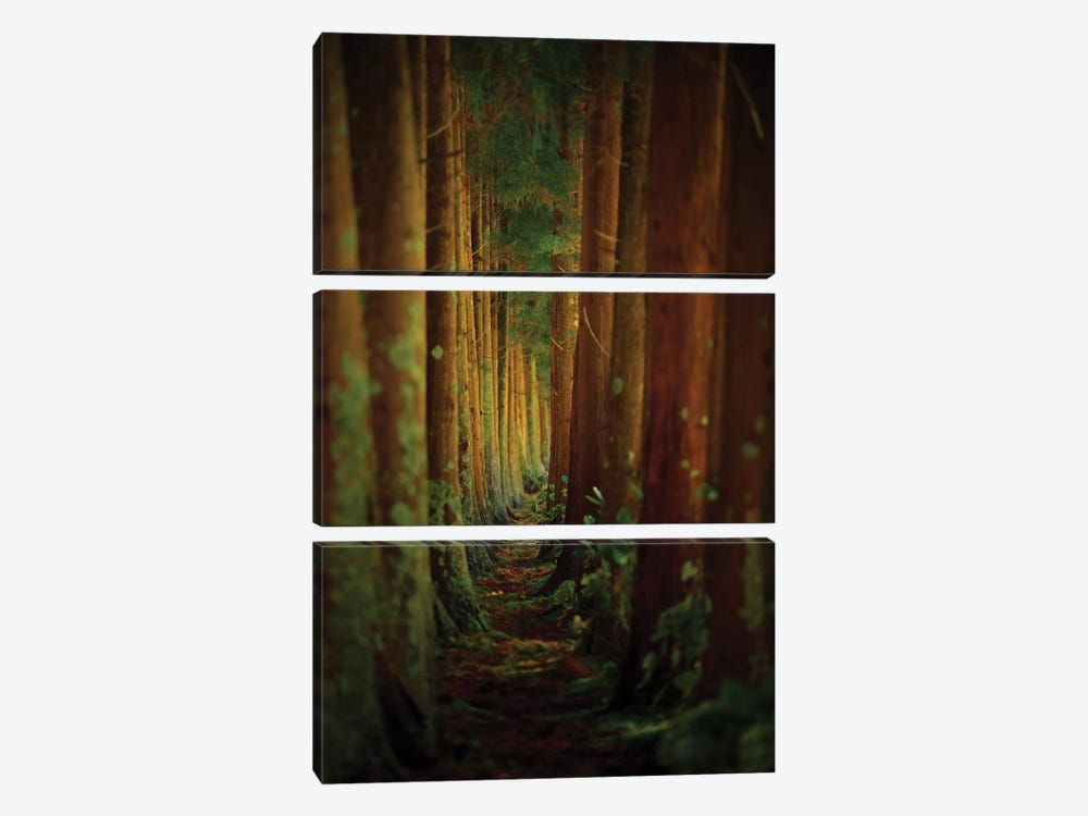 Forest by Rui Caria 3-piece Canvas Art Print