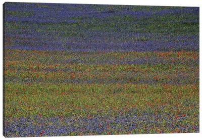 Get Lost Canvas Print #OXM2048