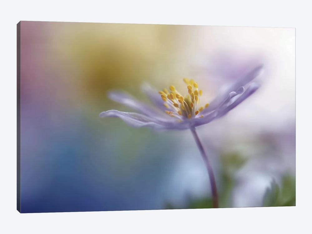 Springtime Watercolor 1-piece Canvas Wall Art