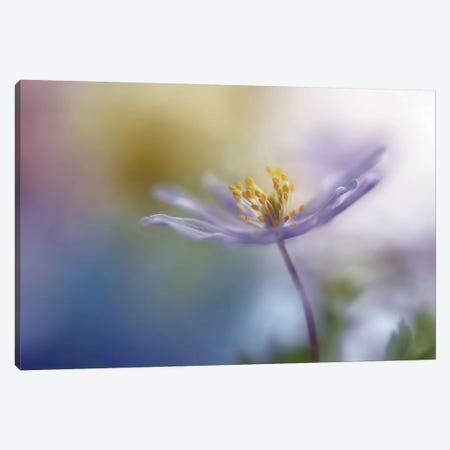 Springtime Watercolor Canvas Print #OXM204} by Heidi Westum Canvas Art Print