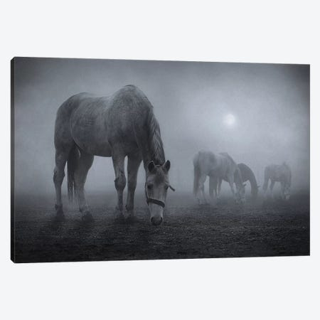 Moonlit Canvas Print #OXM2057} by Samuel Malach Canvas Artwork