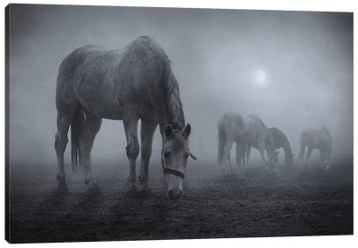 Moonlit Canvas Art Print