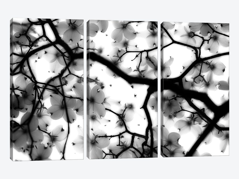 Dogwood by Sarah Wright 3-piece Art Print