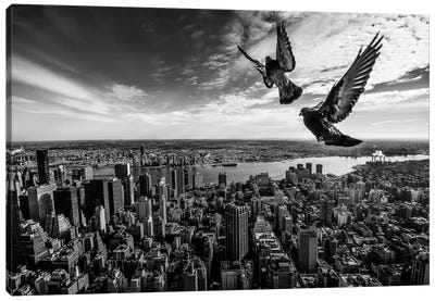 Pigeons On The Empire State Building Canvas Art Print