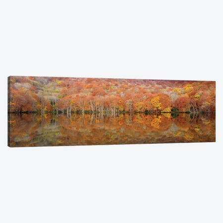 Glowing Autumn Canvas Print #OXM2083} by Sho Shibata Canvas Artwork