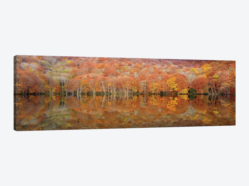 Glowing Autumn 1-piece Canvas Wall Art
