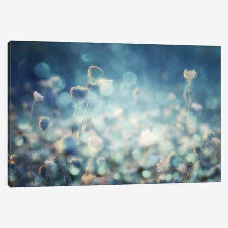 Diamonds Canvas Print #OXM2097} by Stefan Eisele Canvas Art