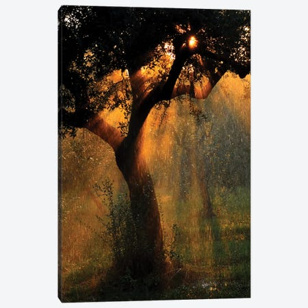 Light Shower Canvas Print #OXM2108} by Stefano Castoldi Canvas Art Print