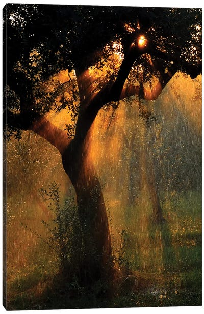 Light Shower Canvas Art Print