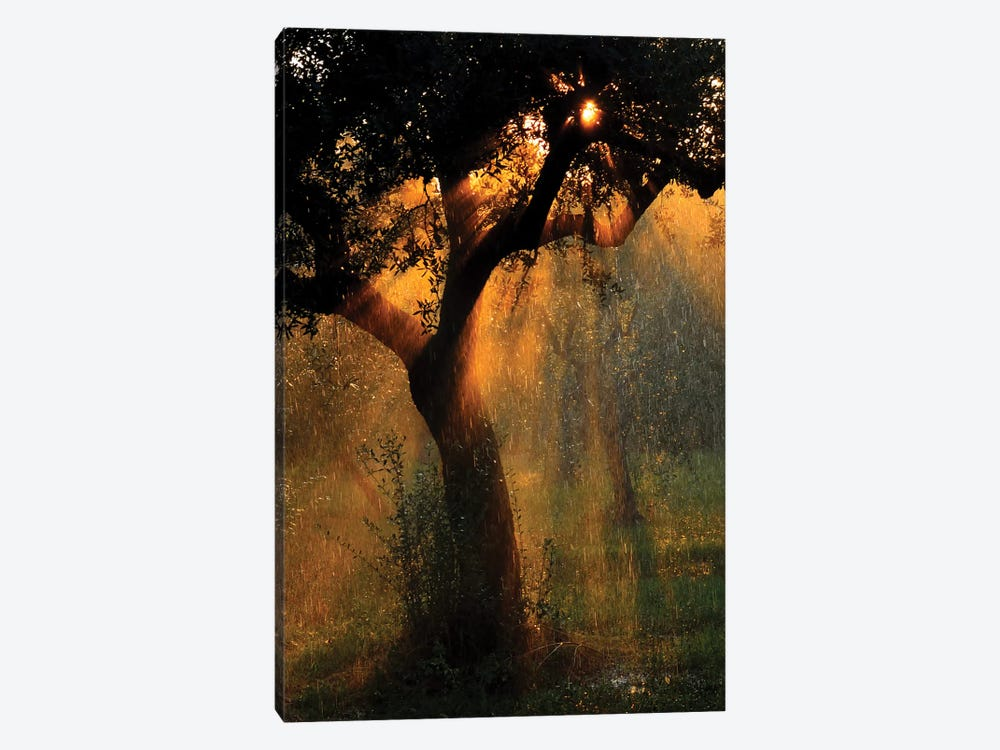 Light Shower by Stefano Castoldi 1-piece Canvas Artwork