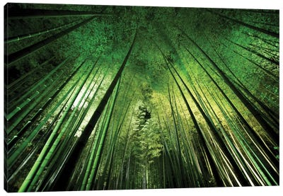 Bamboo Night Canvas Art Print