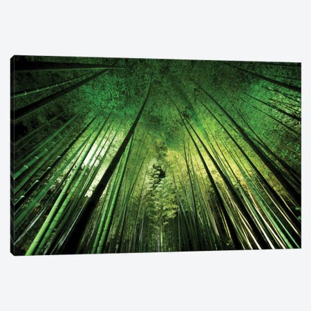 Bamboo Night Canvas Print #OXM2124} by Takeshi Marumoto Canvas Artwork
