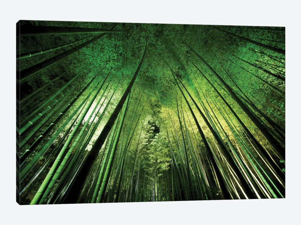 Bamboo Night by Takeshi Marumoto 1-piece Canvas Wall Art