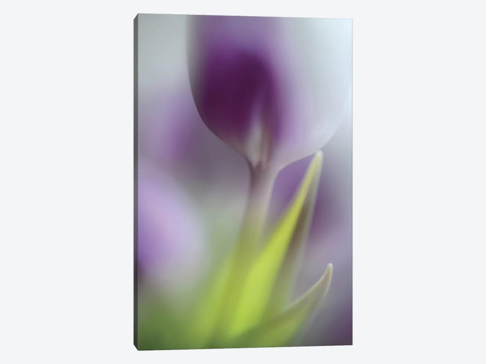 Soft Secrets by Heidi Westum 1-piece Canvas Print